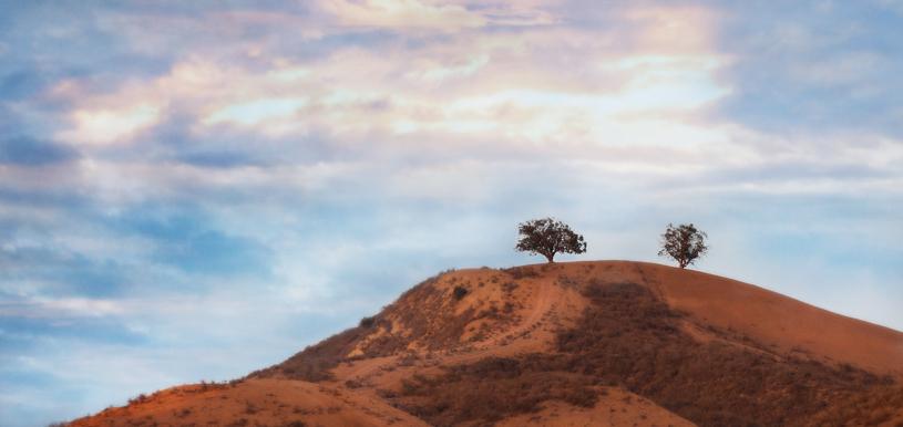 Ventura, two trees